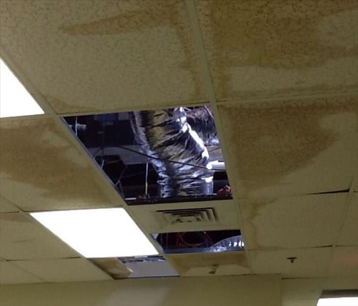 Stained Ceiling Tiles Removed from Office Before