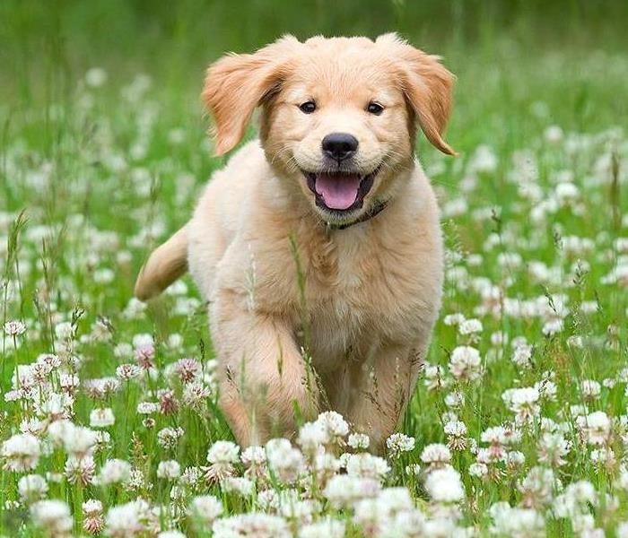 Puppy running through a field